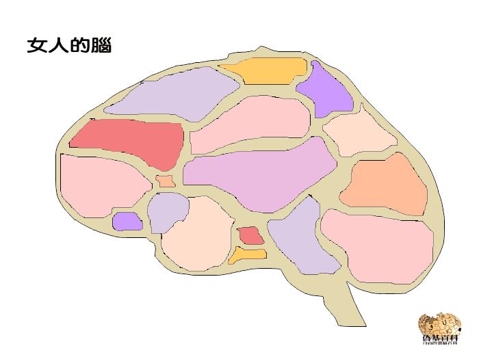女人的腦.png