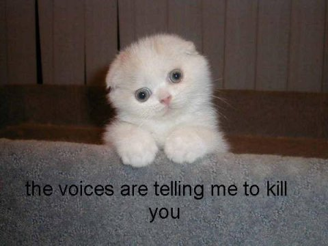 Cat voices.jpg