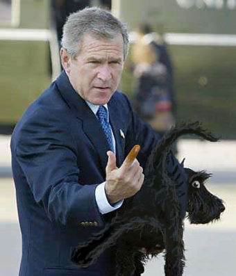 thumb; han har omgang med svarte hunder