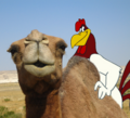 Chicken Camel Love.png