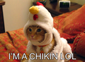 Chikinlol.PNG