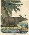 Prehistoric-single-horned-wooly-rhino.jpg