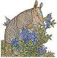 Bo the armadillo pattern artwork.jpg