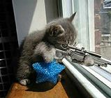 Cat w-machine gun.jpg