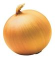 Yellow onion.jpg