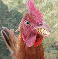 Chicken with teeth.jpg