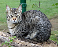 other images of cats