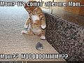 Funny-pictures-kitten-toy-mouse.jpg