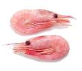Canalshrimp sidebar.png