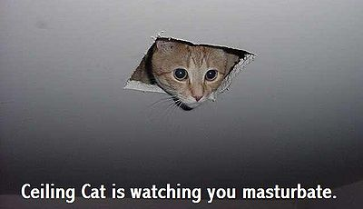 Yikers ceiling cat1.jpg