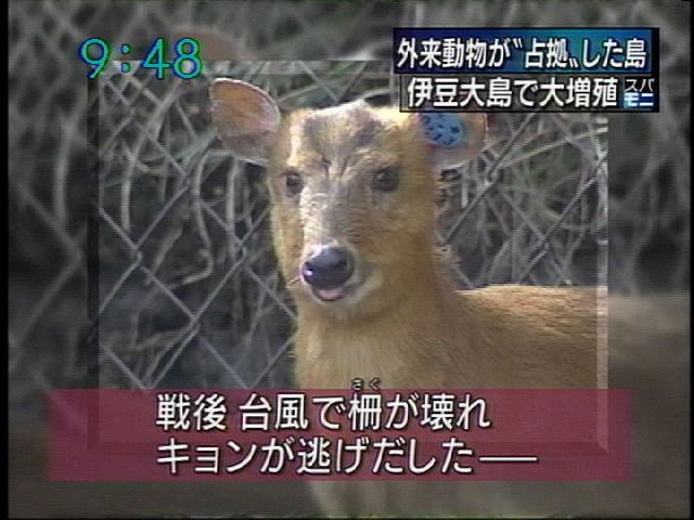 動物 キョン