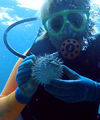 Hugu to diver2.jpg