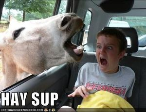 Funny-pictures-horse-in-car.jpg