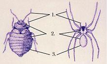 Alguns artrópodes são fofinhos