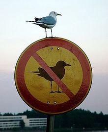Larídeos são aves transgressoras